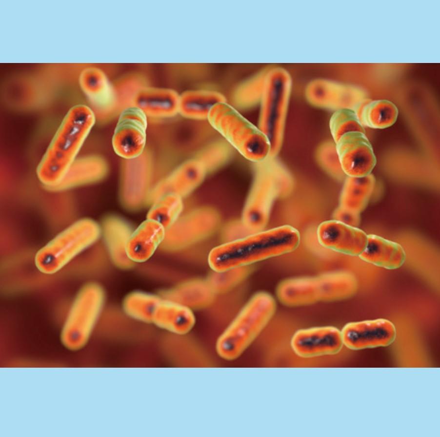 乳酸菌-益生菌推薦